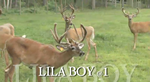 Lila Boy Video